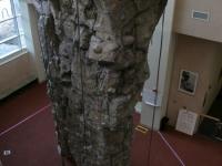 nicros-climbing-wall-elgin-rec-center-4