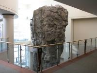 nicros-climbing-wall-elgin-rec-center-6