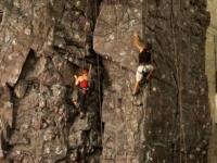 nicros-climbing-wall-st.olaf-2