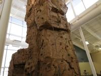nicros-climbing-wall-u-pittsburgh-1